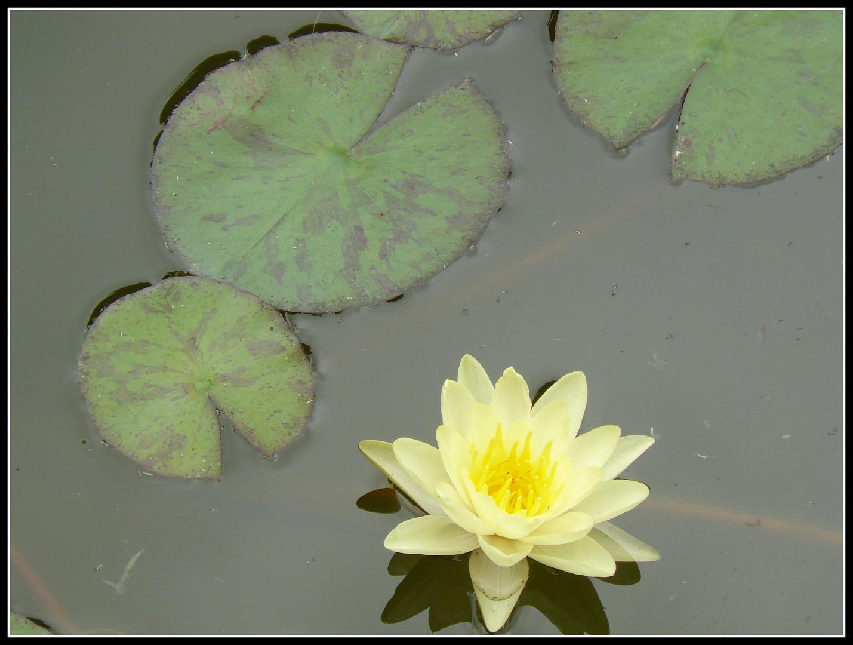 en el estanque...