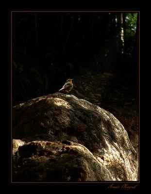 En el Fondo del Bosque