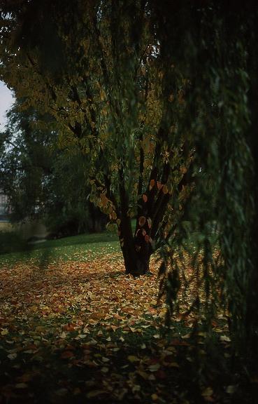 En face de l'arbre