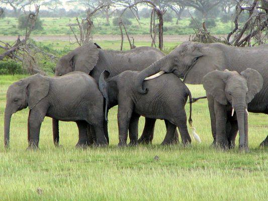 en file africaine