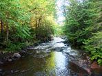 En forêt au Québec au mois d'août