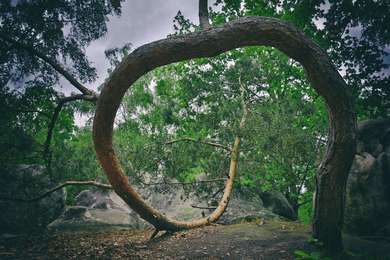 En Forêt Magique 1