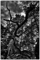 En Forêt Magique 2