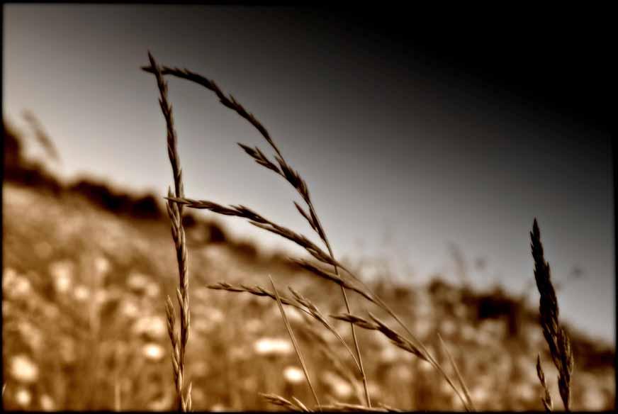 en herbe