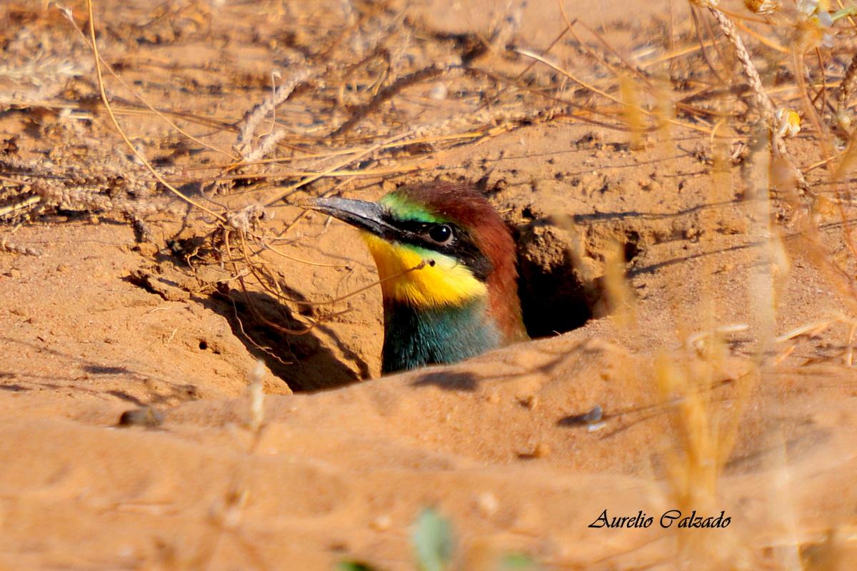 En la boca del nido