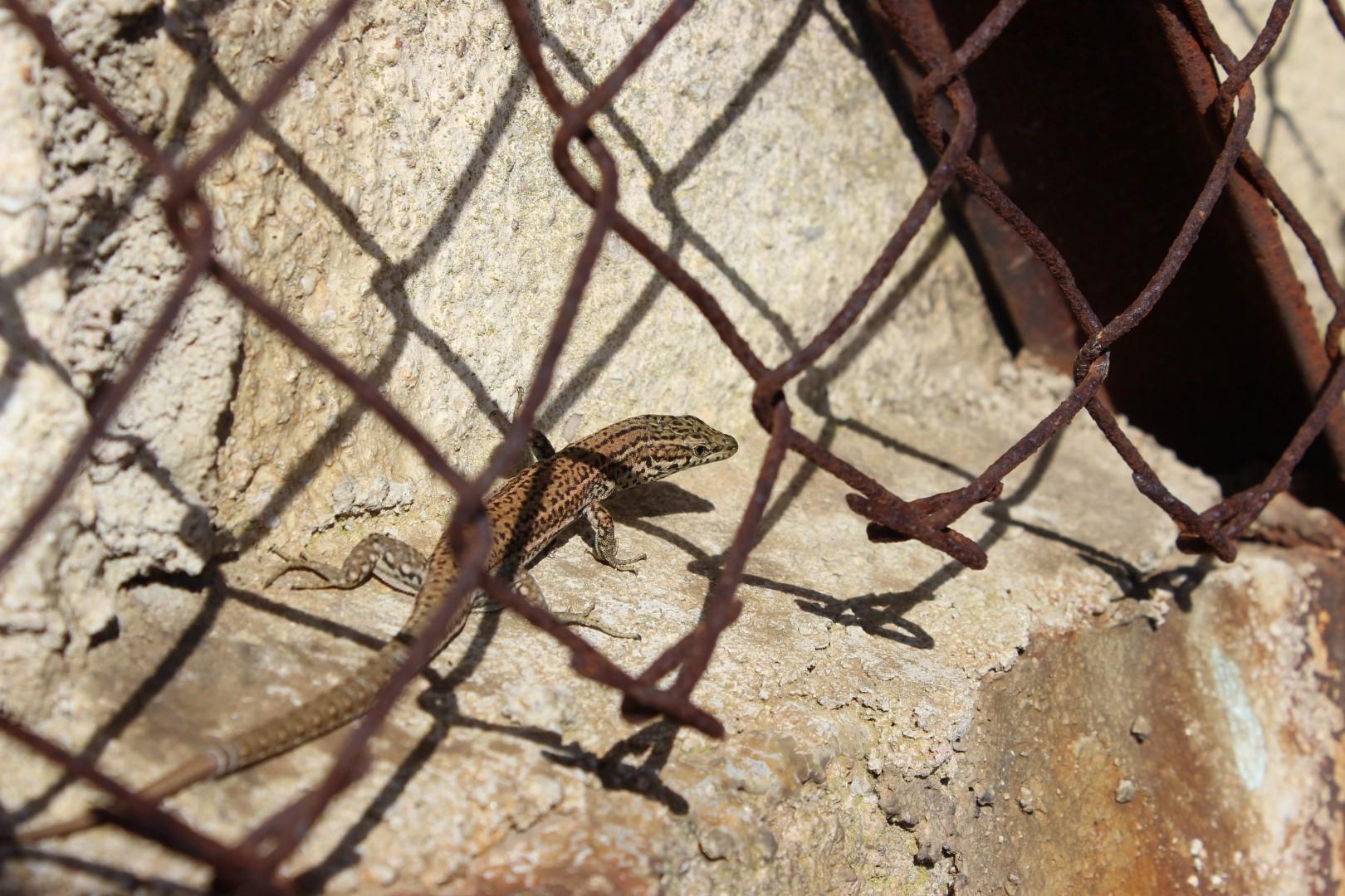 En la jaula