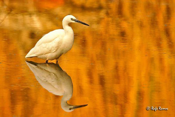 En la laguna dorada...