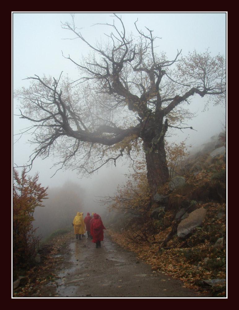 En los caminos del otοño........