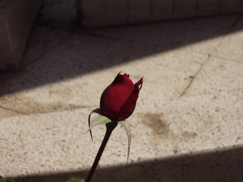 En medio de las sombras