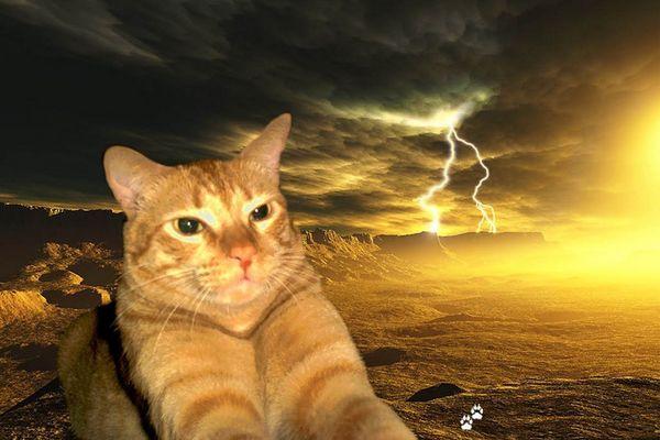 en memoria ami gato. in memory to my cat