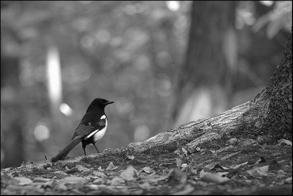 en noir et blanc.