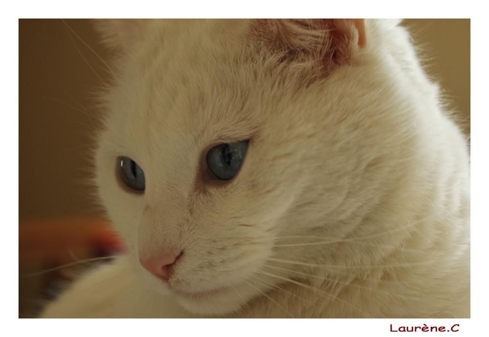 En parlant de chats... voici Yuna, le chat de Vincent