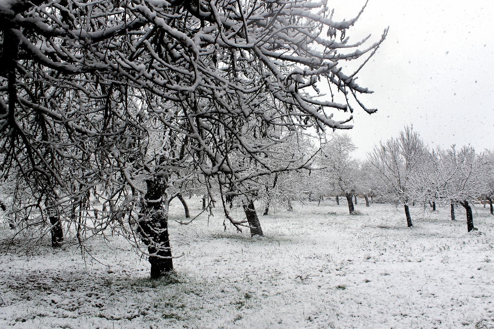 En plena nevada a nivel de mar en Mallorca ... poco habitual.