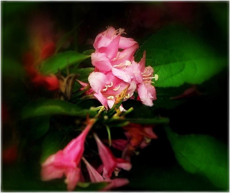 en rose et vert