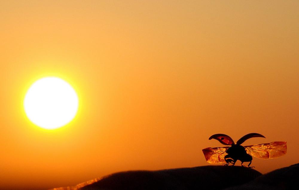 en route vers le soleil,