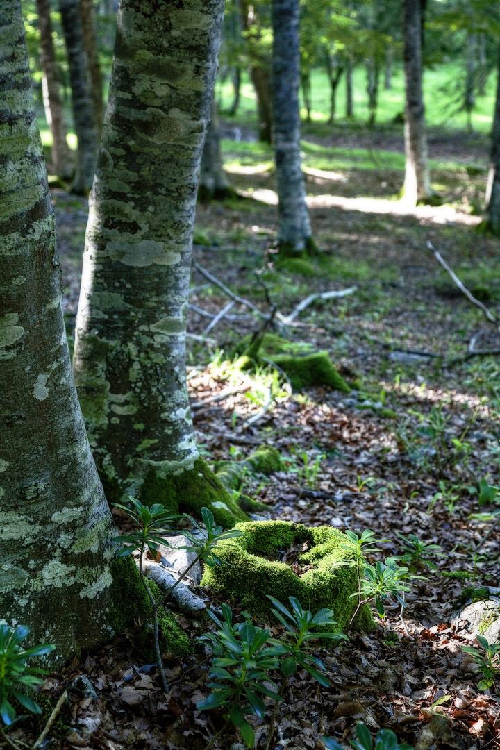 En un rincón del bosque