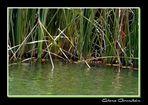 En un rincón del lago