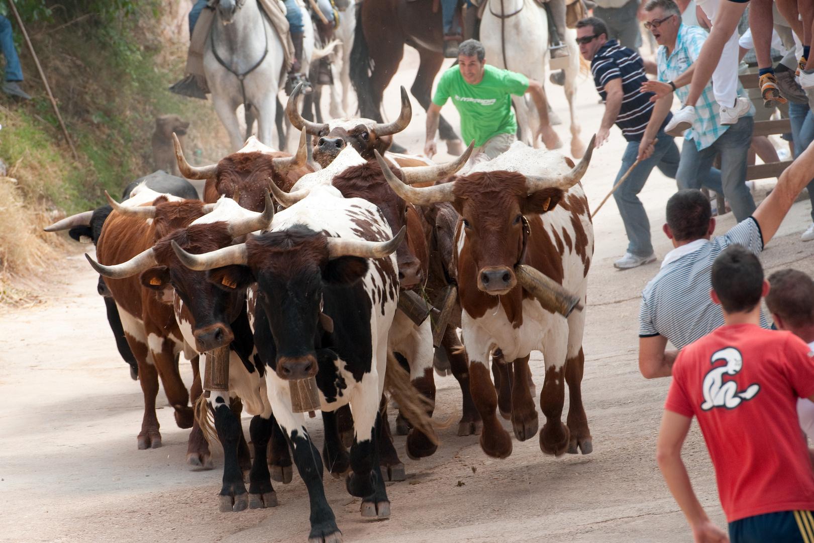 Encierro en La Vegallera (Albacete)