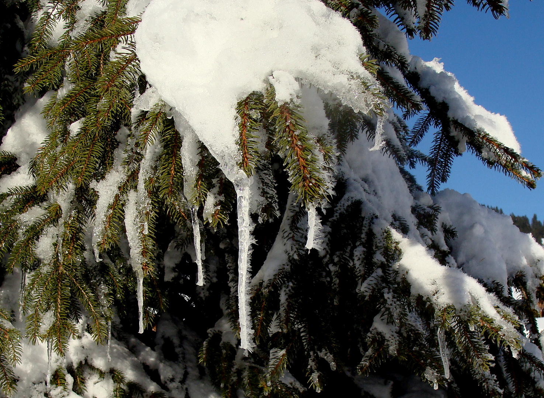 Encore 2 mois de neige / Todavia 2 meses de nieve / Noch 2 Monate Schnee.1