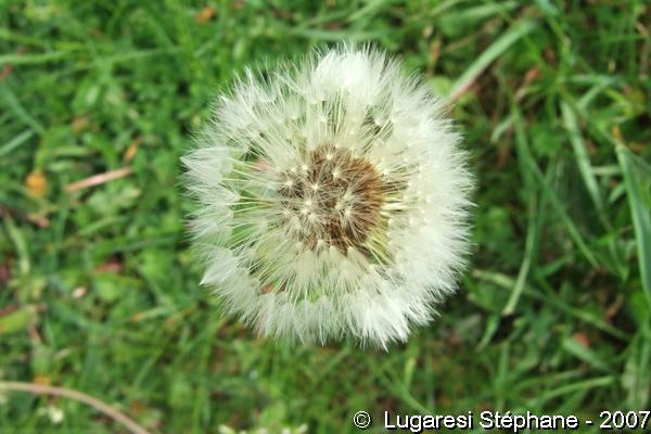 Encore des fleurs et de la nature