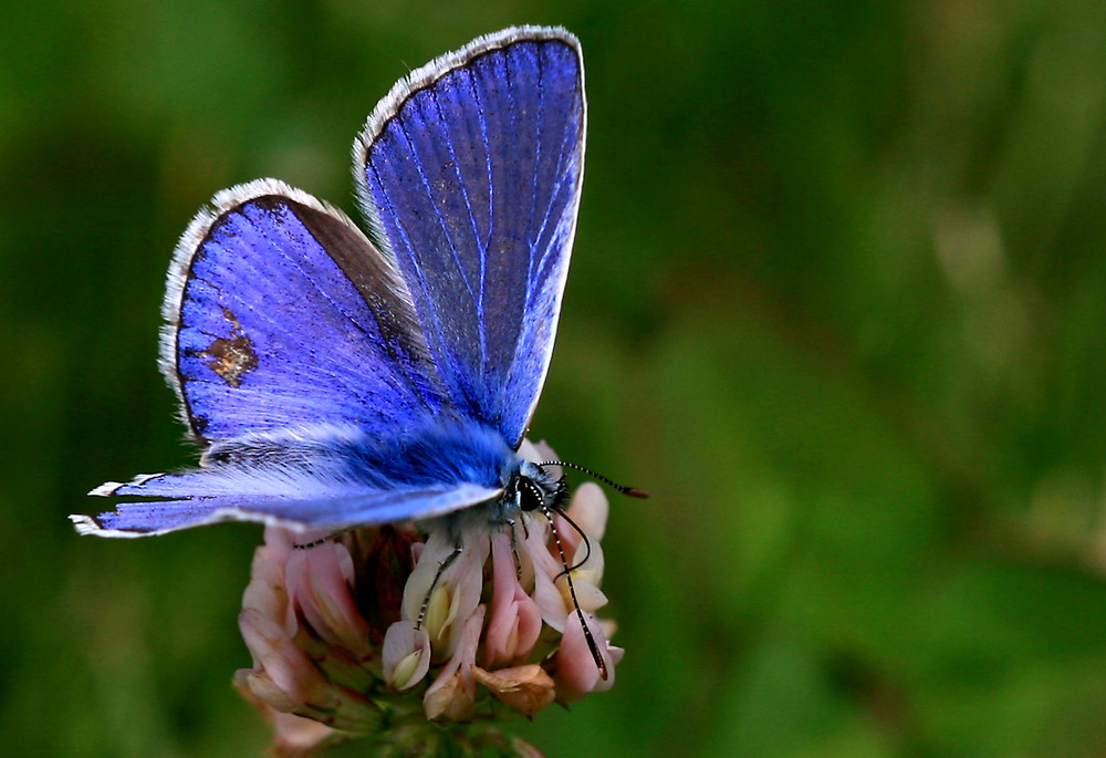 Encore un papillon !