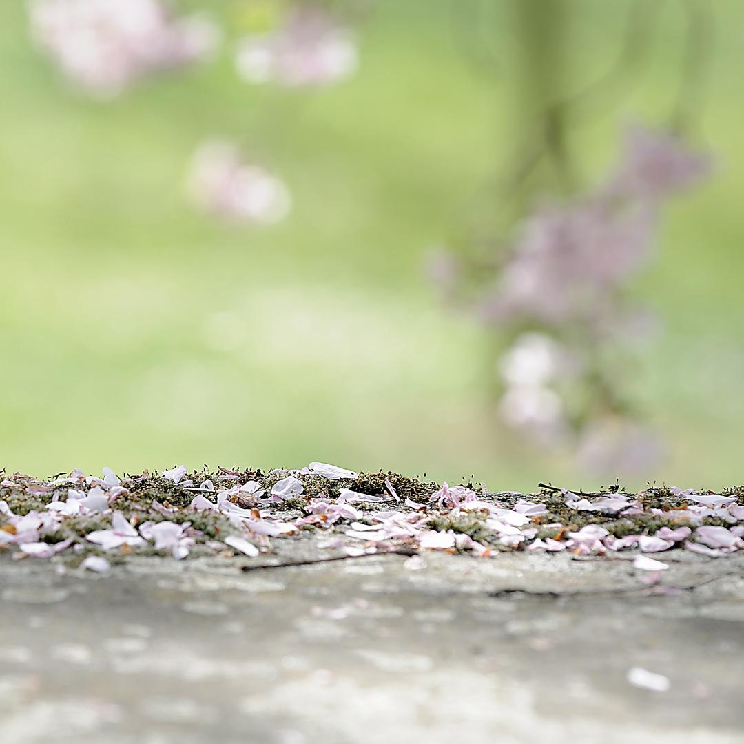 Ende der Kirschblüte