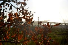 Ende eines Herbstes