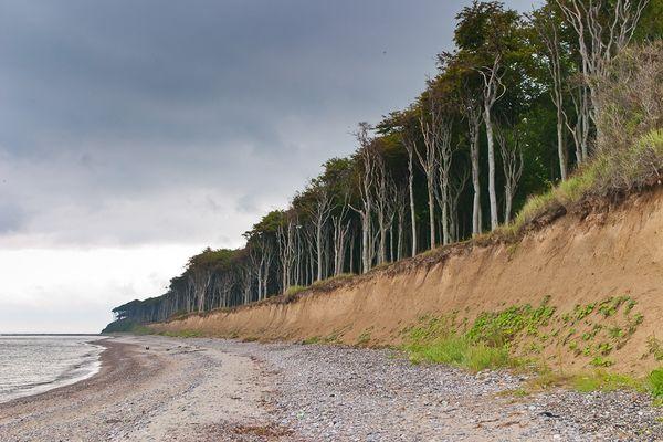Ende Land - Ende Wald