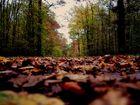 Ende Oktober im Wald