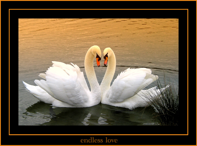 *endless love*