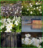 Endlich bald Frühling, eine Vorfreude.........................