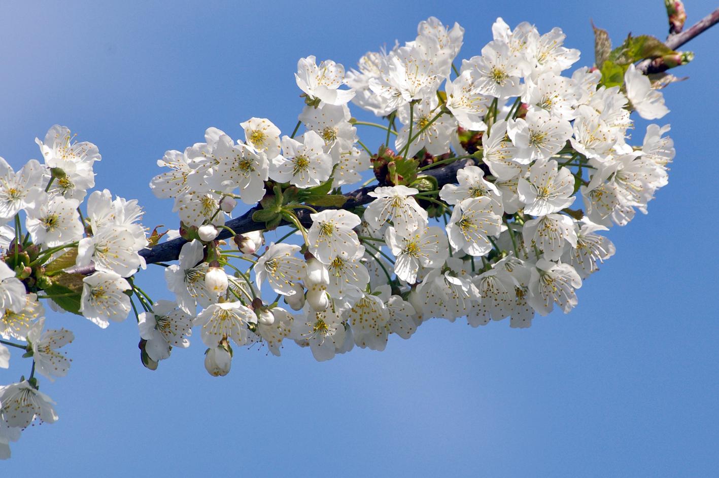 Endlich Baumblüte