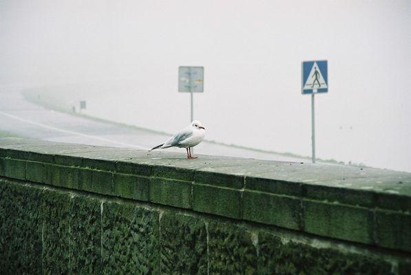 """""""endlich bin ich in Krakow:-)""""sagt der Vogel"""