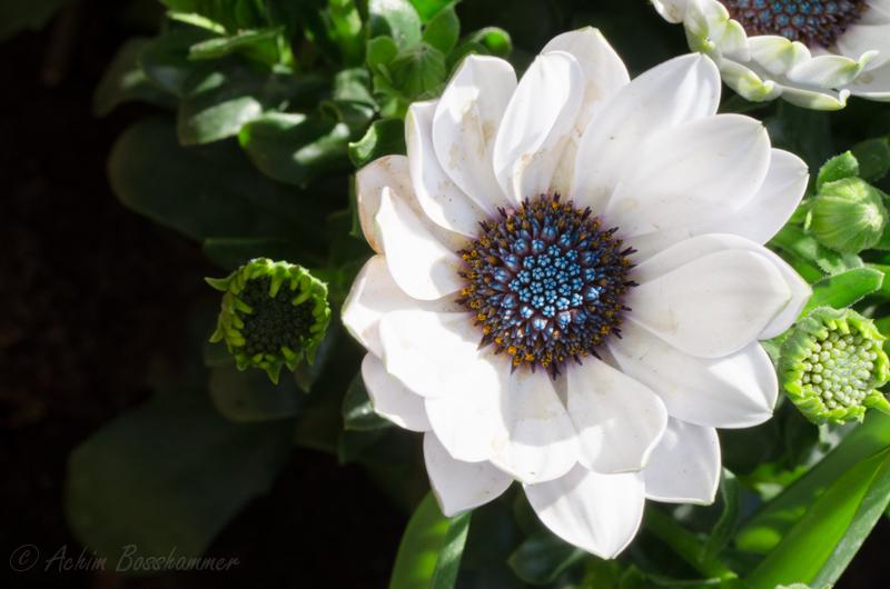 Endlich Blüht es
