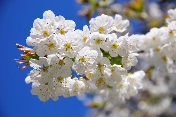 Endlich Blüten