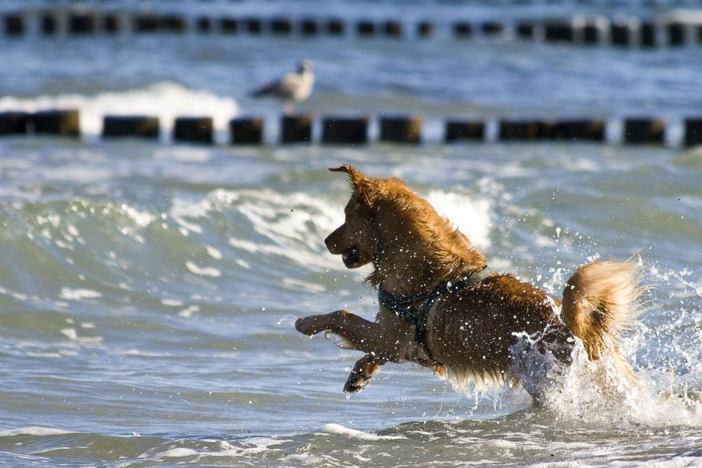 Endlich darf ich ins Wasser!