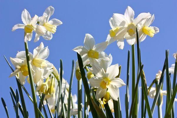 Endlich - Der Frühling ist da