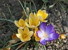 Endlich - der Frühling kommt