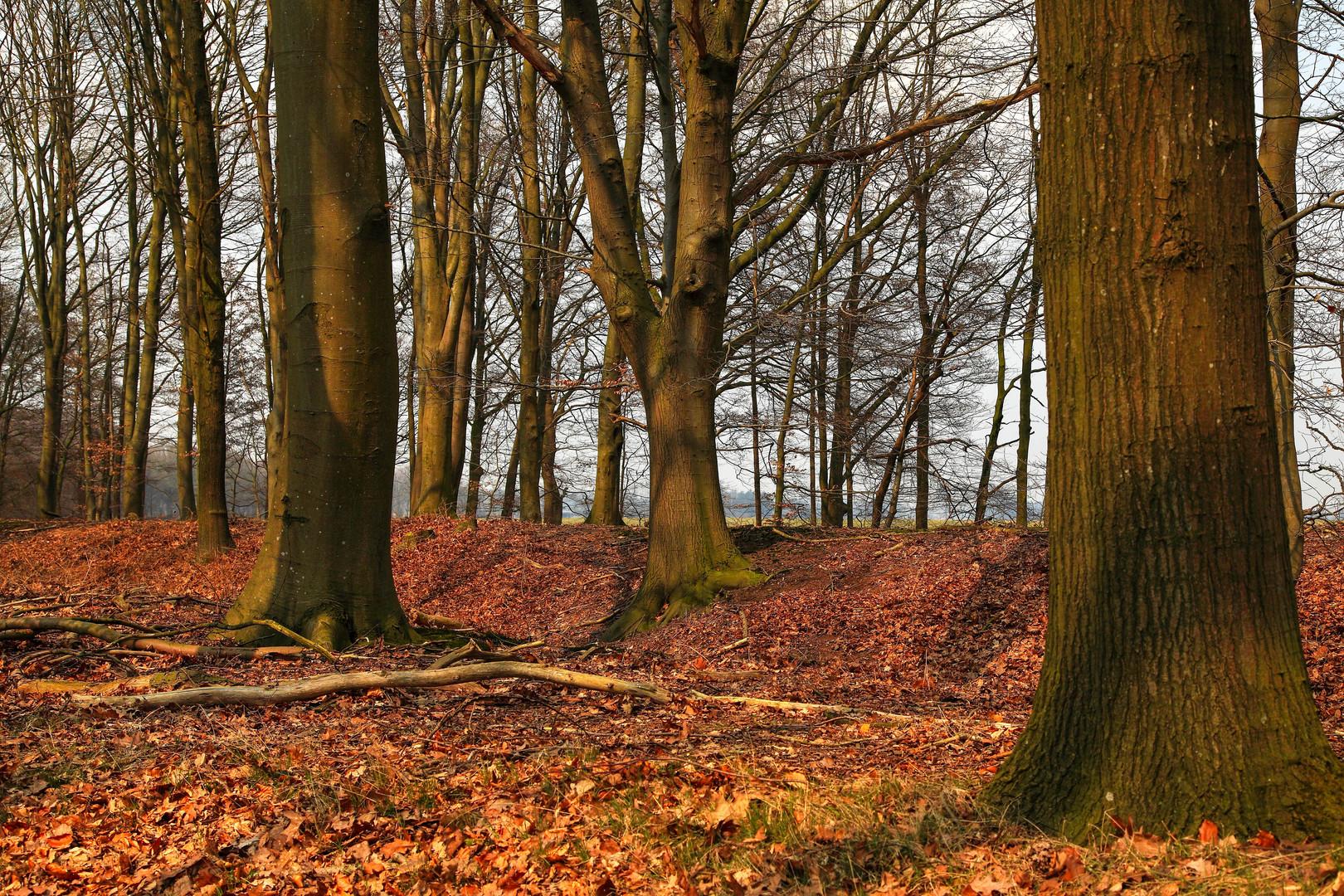 Endlich.. Farbe im Wald !