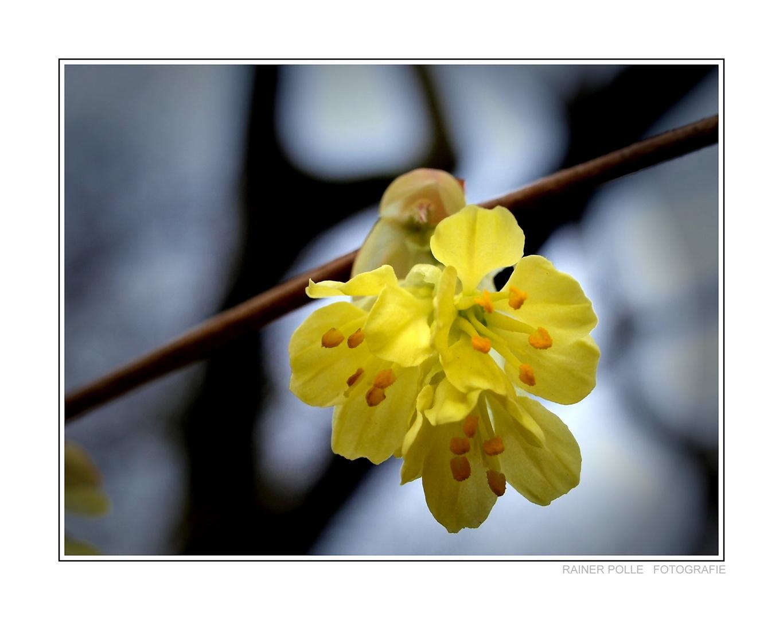 ~ Endlich Frühling ~