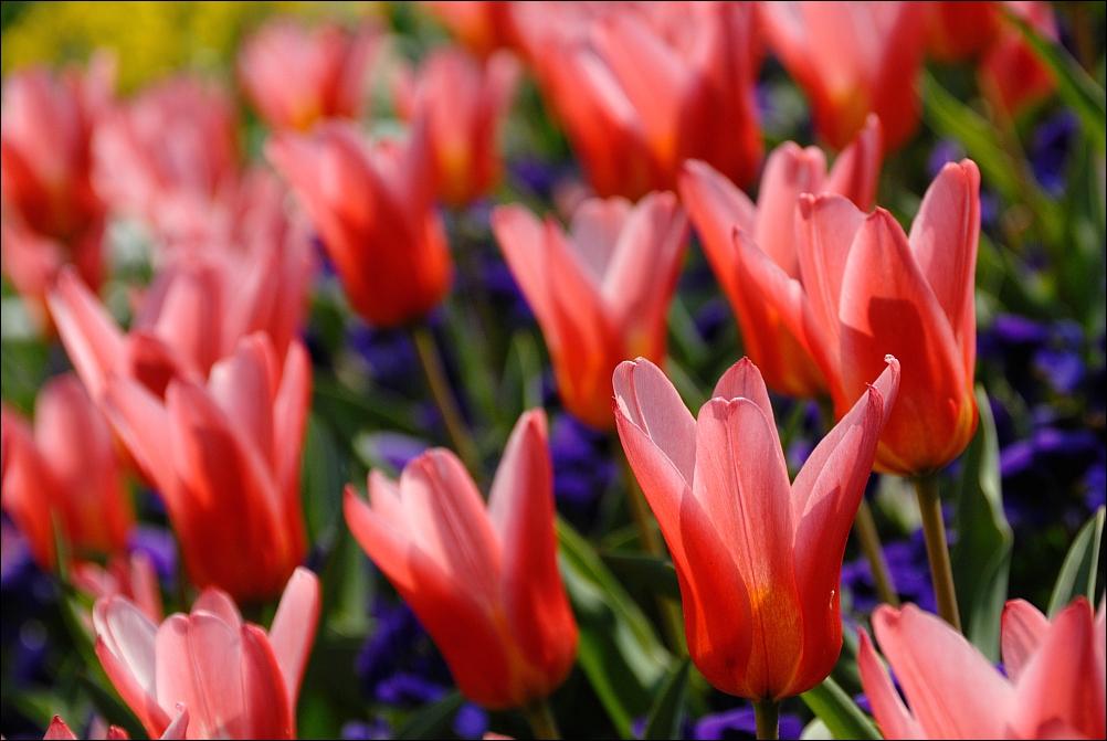 Endlich Frühling...