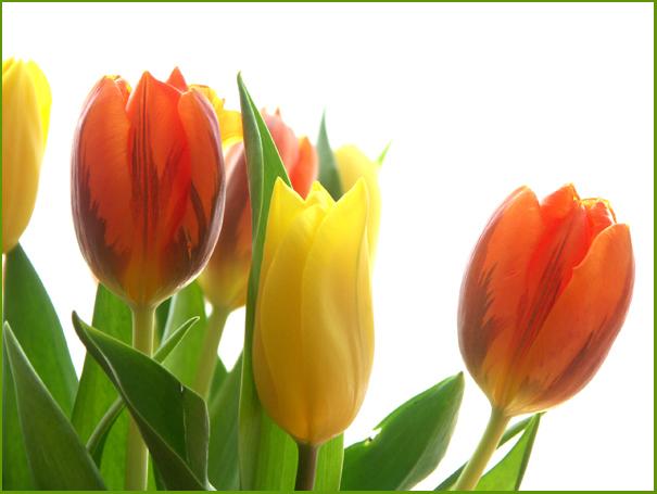 endlich Frühling ...
