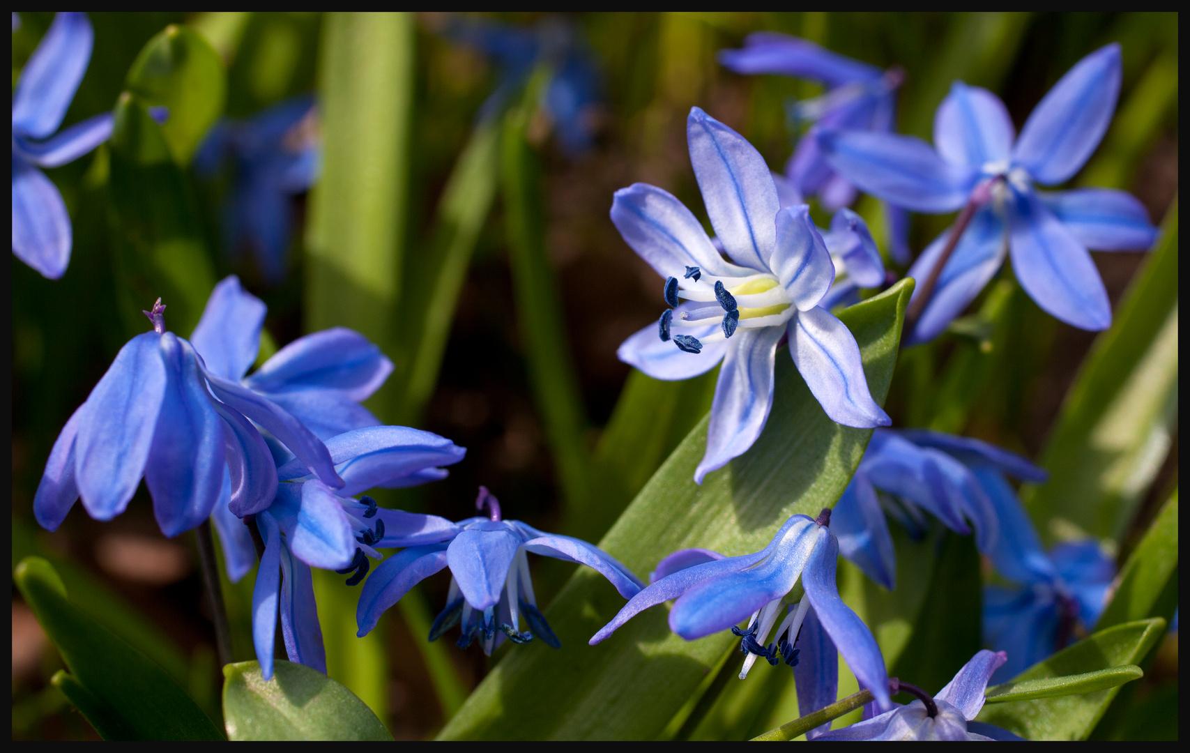 ... endlich Frühling 2