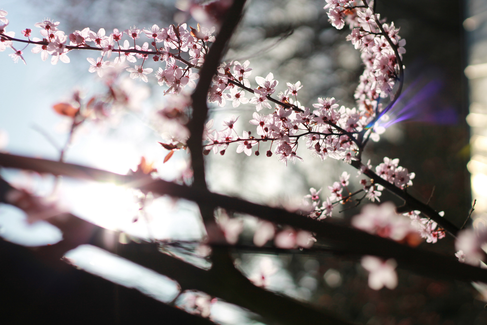 Endlich Frühling *-*