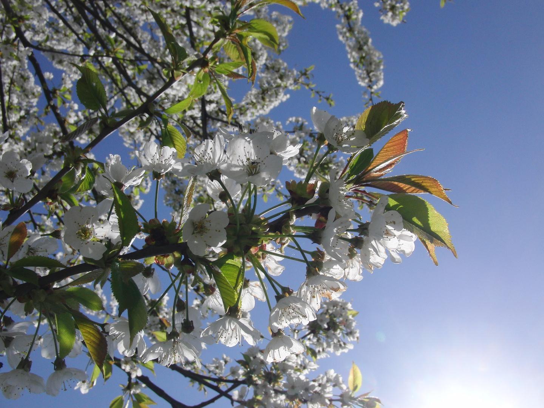 Endlich Frühling! (3)