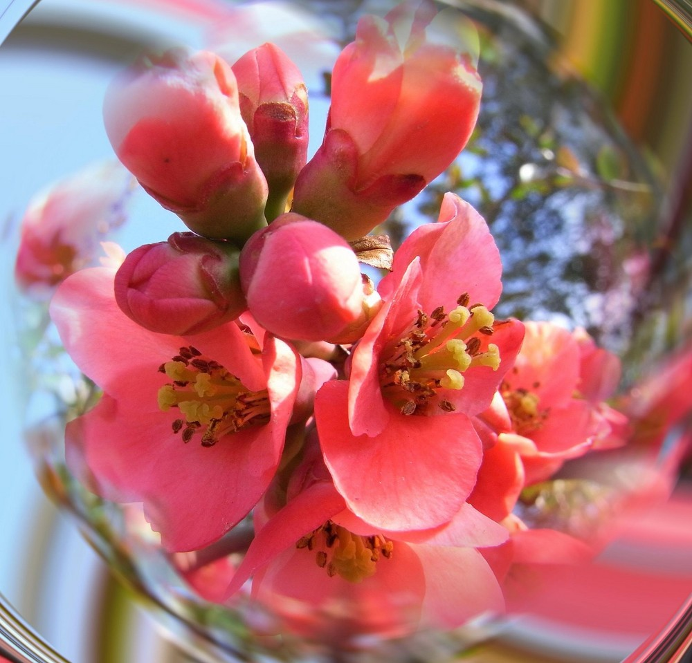 .:Endlich Frühling!:.