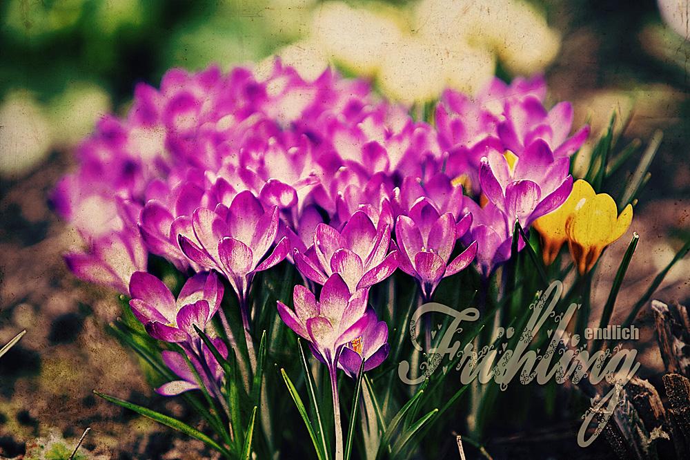 * endlich Frühling *