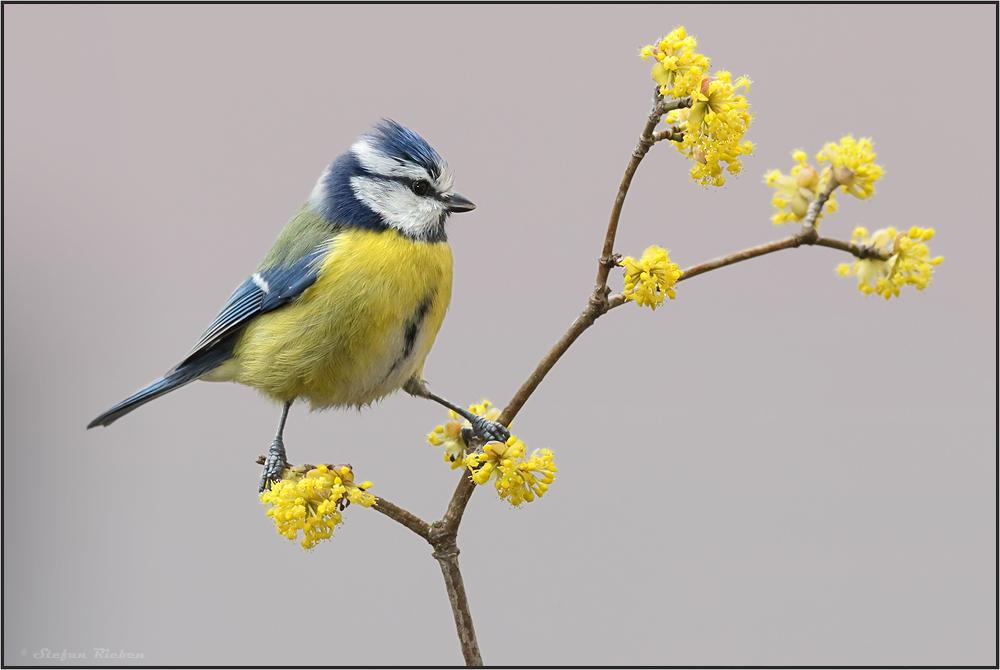 Endlich Frühling !!