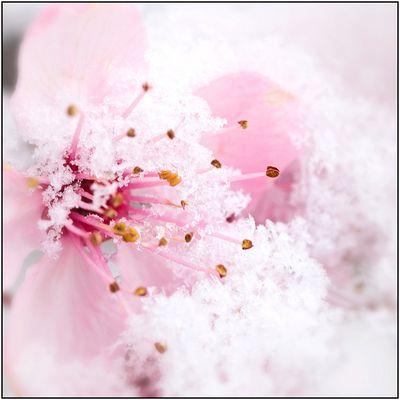 Endlich Frühling......