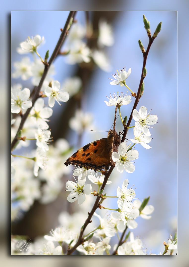 Endlich Frühling!